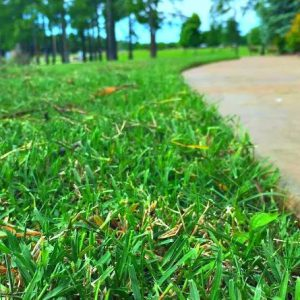 Lawn Treatments Tulsa OK